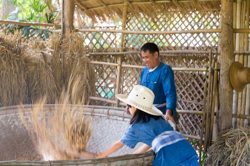 脱穀、籾摺り、といった収穫後の作業も体験