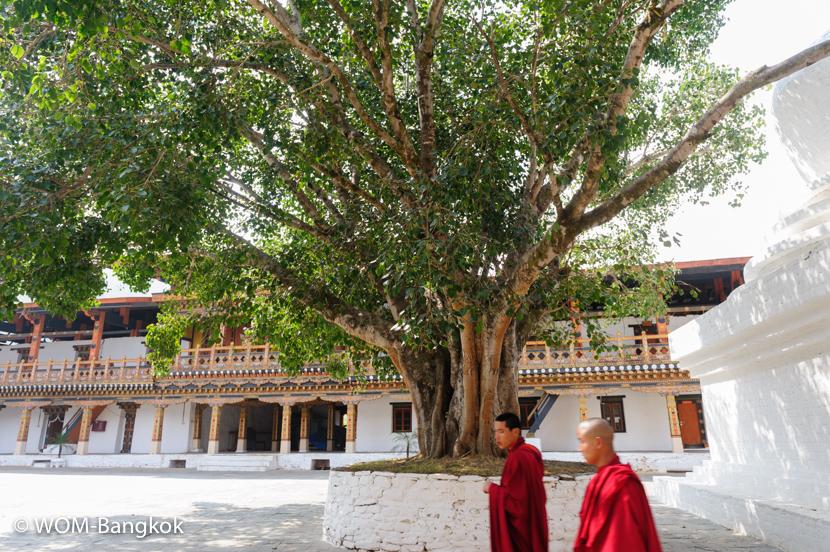 中庭にはお釈迦様と縁の深い大きな菩提樹が