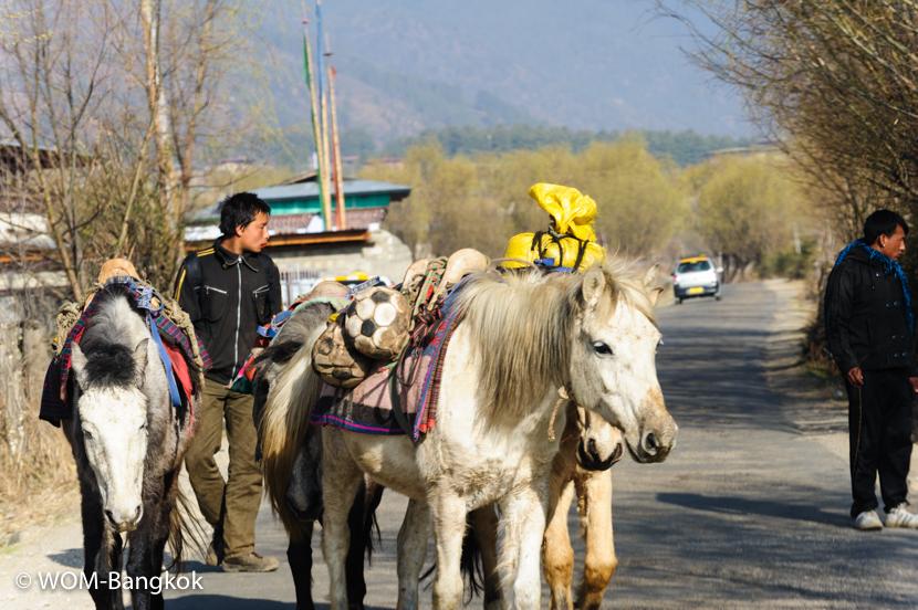 馬の群れに遭遇