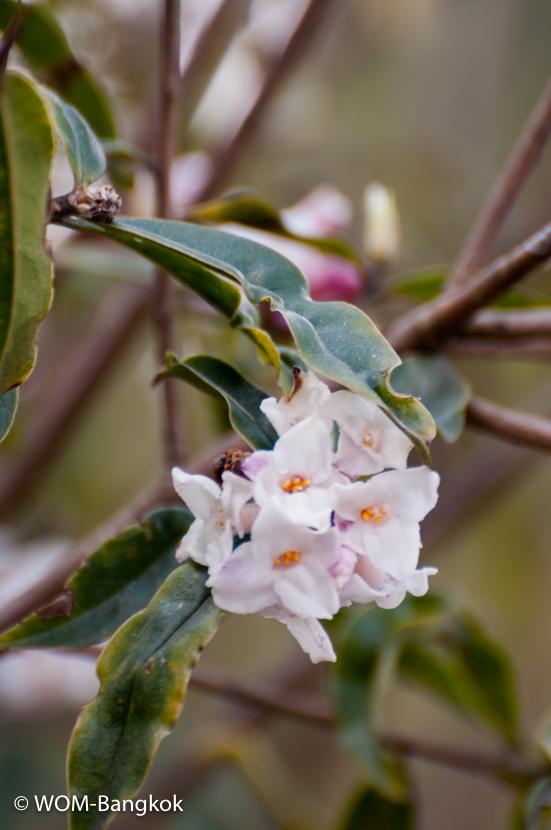 春には石楠花や木蓮が咲き乱れます